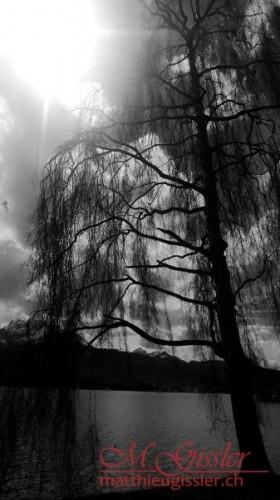 Baum beim Verkehrshaus Luzern