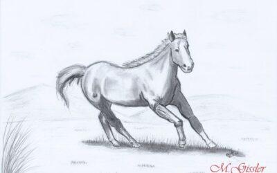 das eine Pferd