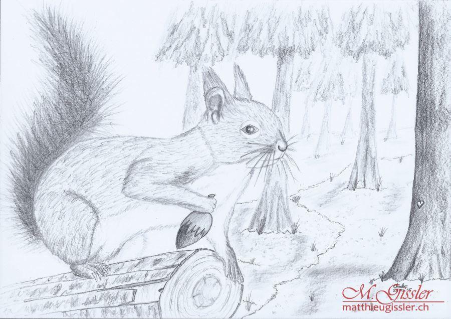 Eichhörnchen_Tamara