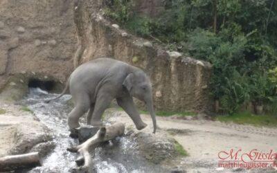 Zoo Zürich 2017
