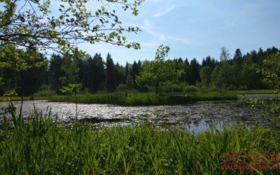Naturschutzgebiet Vogelmoos