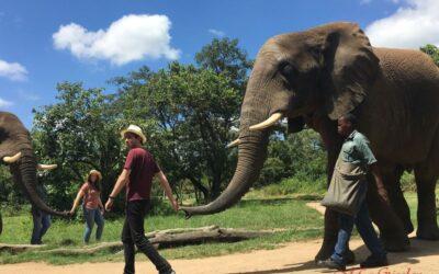 Afrika 2018 | Elephant Sanctuary