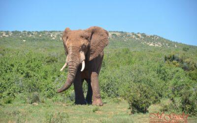 Afrika 2018 | Elefanten