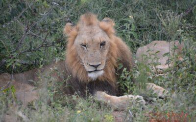 Afrika 2018 | Krüger Nationalpark