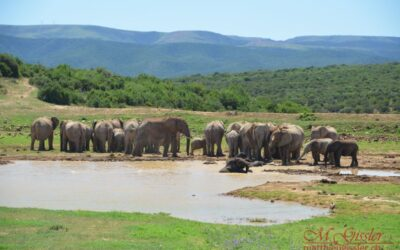 Afrika 2018 | Addo Elephant Park