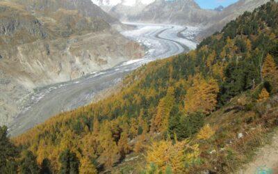 Aletschgletscher 2010